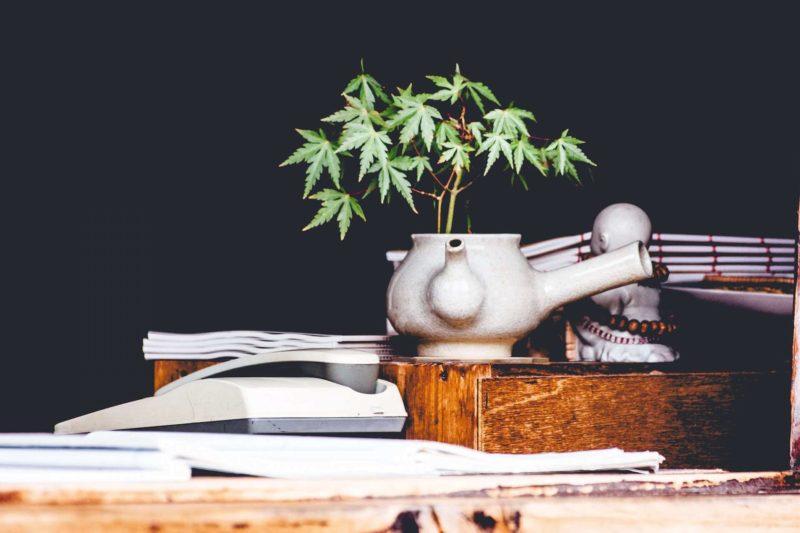 Bürotisch mit Pflanze