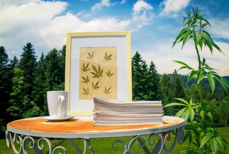 Tisch mit Zeitschriften, einem Bild mit Hanfblättern und einer Hanfpflanze