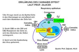 Epithel Zelle und Wirkung von Cannabis